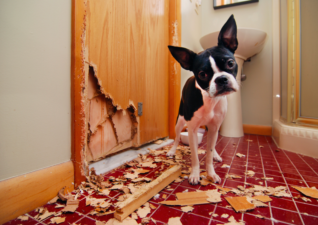 'But it's not my dog.' The 6 commonly misunderstood rental responsibilities